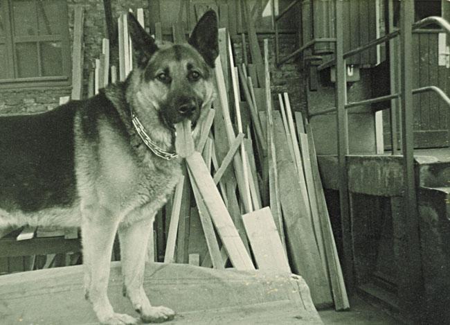1980er: Conny – treuer Wachhund und Spielgefährte von Nicolai Lucks